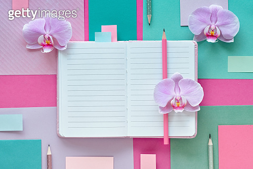 Orchid flowers on geometric background with copy-space, floral paper background in pink and mint