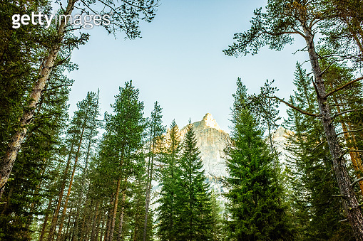 Scenic pine woodland in Dolomite Alps, Italy