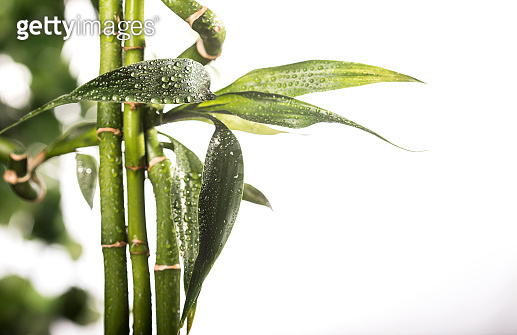 Grean bamboo leaves isolated on white background