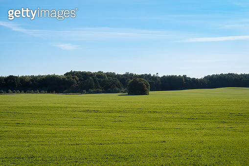 green meadow under blue sky on a clear sunny day