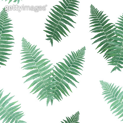 Herbs and Leaves Botanical Seamless Pattern. Fern Leaf Natural Background. Floral Forest Field Plants Design for Wallpaper Print Tropical Decoration. Vector illustration