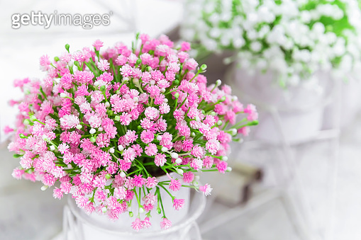 Elements and details of garden and home decor and interior. Artificial plants small flowers of pink color on a light background