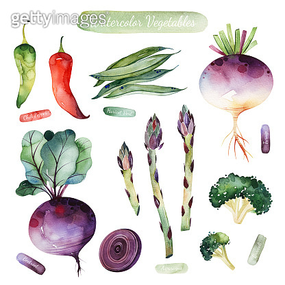 Colorful set with chili pepper,beetroot,asparagus,broccoli,turnip