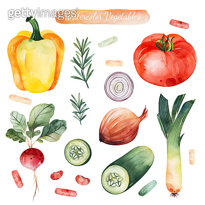Watercolor hand painted vegetables isolated on white background.Colorful set with tomato,onion,cucumber,yellow pepper,radish,rosemary.Vegetarian collection.Pefect for your design,recipes,invitations