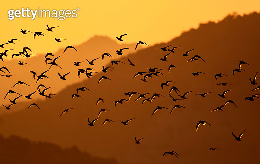 Flying birds. Abstract nature. Warm color nature background.