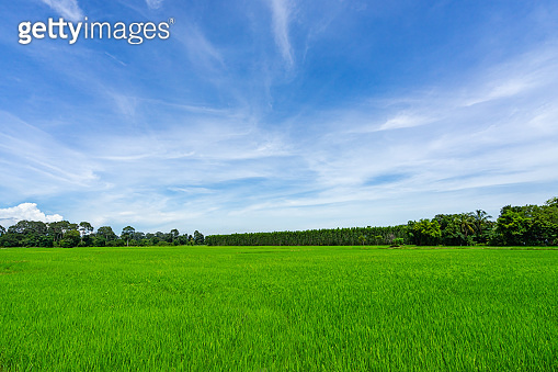 Landscape of grass field and green environment public park use as natural background,backdrop.