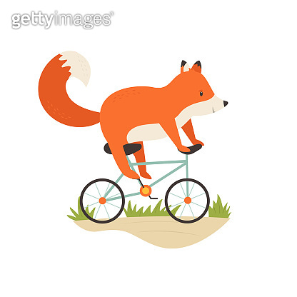 Funny little fox riding a bicycle. Vector illustration. Animal character design. Baby print isolated on white background
