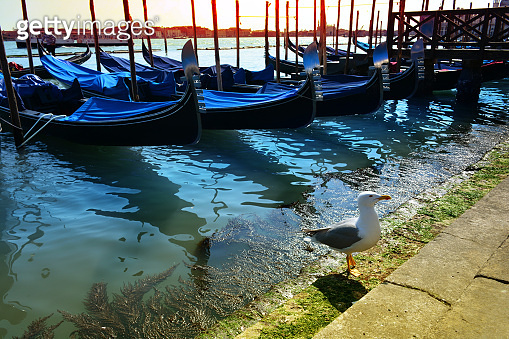 Venice, Italy. A bird near gondolas in a romantic narrow canal