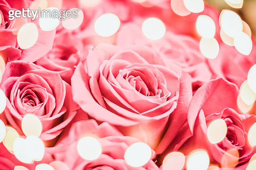 Festive elegant pink rose with bokeh lights. Happy birthday greeting card, Gift for Valentine's Day.Happy morthers day.Pink roses bouqet, Romantic postcard.bunch of fresh roses.Floral wedding or Valentine card concept