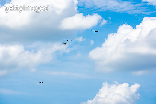 blue sky and white cloud on daytime in summer, blurred pigeon flying on sky
