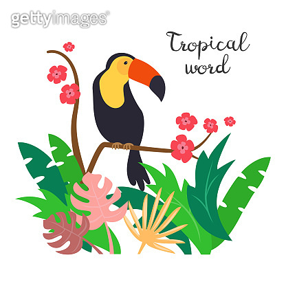 Colorful toucan on the white background.