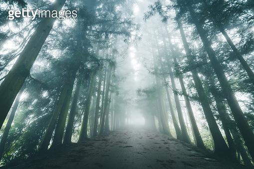 Fog Road in Winter