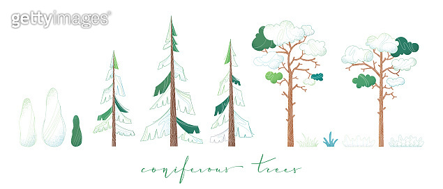 Vector set of coniferous trees.