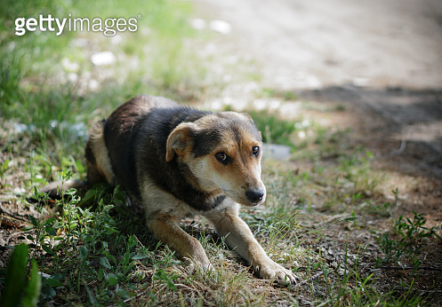 Beautiful dog on nature with sad eyes. Domestic animals in the nursery. Stock photo
