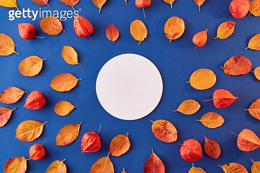 Mockup round white frame with branches and green leaves on a green background
