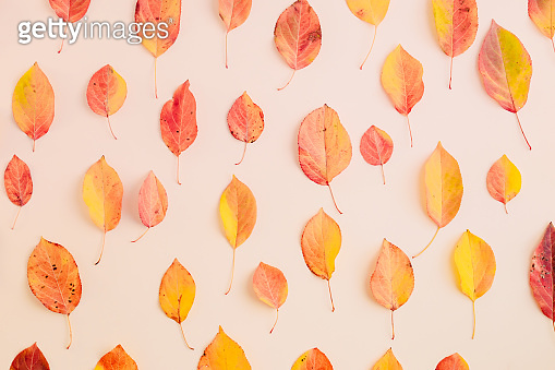 Flat lay pattern with colorful autumn leaves on a color background