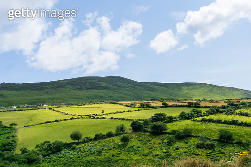 Green fields and fields on Ireland island at blue sky