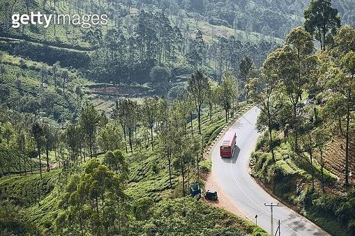 Road through tea plantations