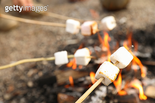 Frying marshmallow on bonfire outdoors. Camping season