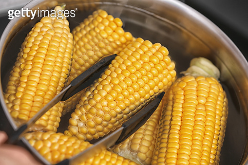 Putting raw corn cob into stewpot, closeup