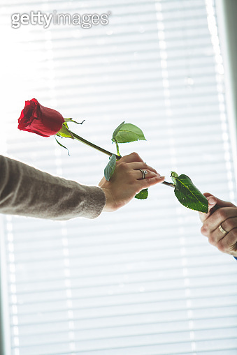 Giving her a single red rose