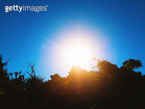 Dazzling sun over silhouetted foliage