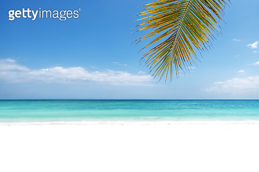 Blur beautiful tropical white beach and nature green palm leaf -- Summer background