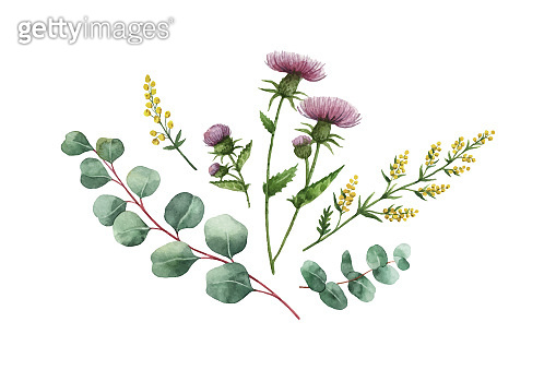 Watercolor vector bouquet with green eucalyptus leaves and medical plants.