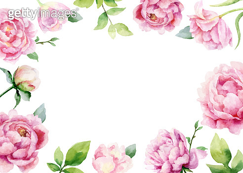 Watercolor vector hand painting card of peony flowers and green leaves.