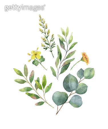 Watercolor vector bouquet with green eucalyptus leaves and field plants.