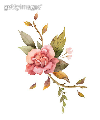 Watercolor vector autumn arrangement with rose and leaves isolated on white background.