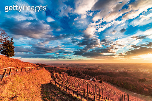 Colorful sunset in the italian vineyards