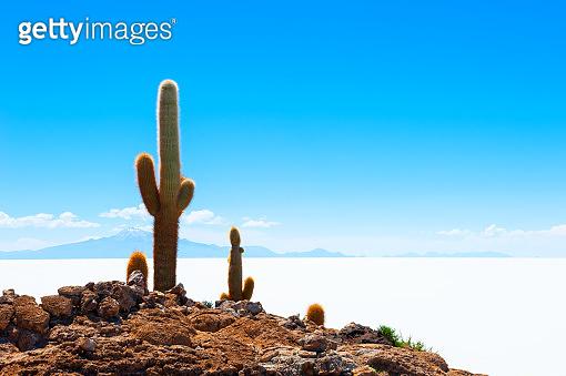Cactus on Salar de Uyuni salt flat, Bolivia.
