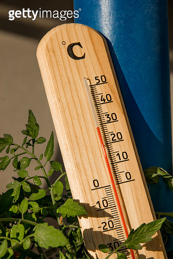 Thermometer With Green Plant At Summer Heat Weather