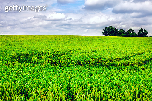 Landscape of Green Field and Sky