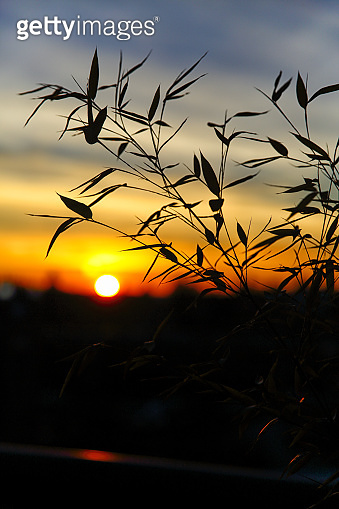 Beautiful Sunset over Bamboo Leaves
