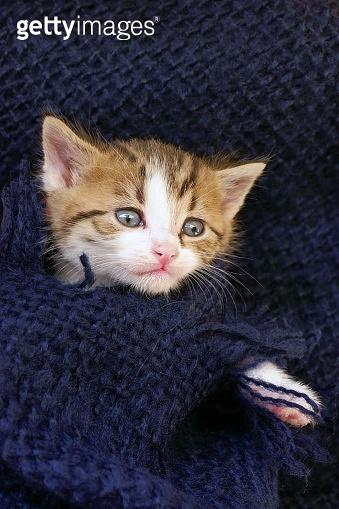 Kitten in a woolen plaid.Home pet. Small striped kitten portrait in a blue woolen plaid.