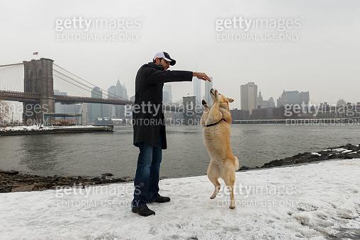 Man playing with his husky dog, New York