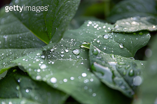 Droplets of water on the leaves