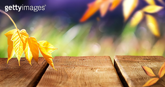Autumn bright multicolored natural background. Yellow autumn leaves and the surface of a wooden table in the autumn forest. Free space for text and design. Copy space.
