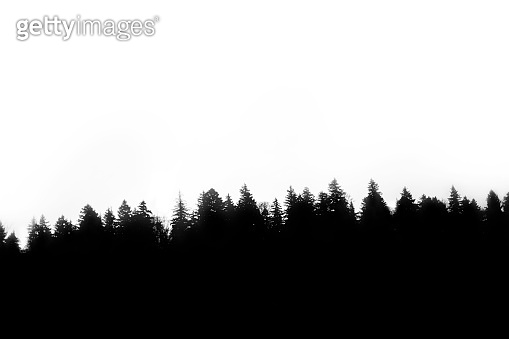 forest silhouette isolated