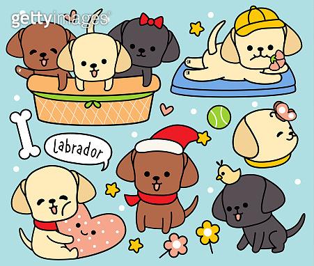 set cute dog labrador
