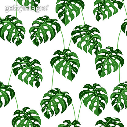 Seamless pattern with monstera leaves.