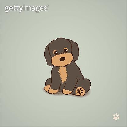 Chocolate Brown Havanese Puppy Dog