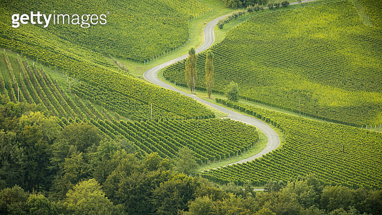 green vineyard / grape hills and a curvy road at the Weinstrasse near Gamlitz - summer morning