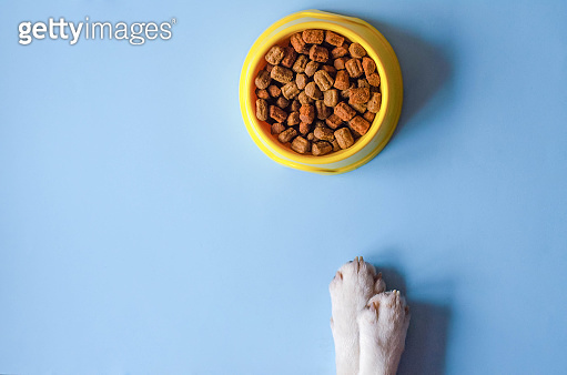 One bowl of yellow color with food and paws with a dog face.