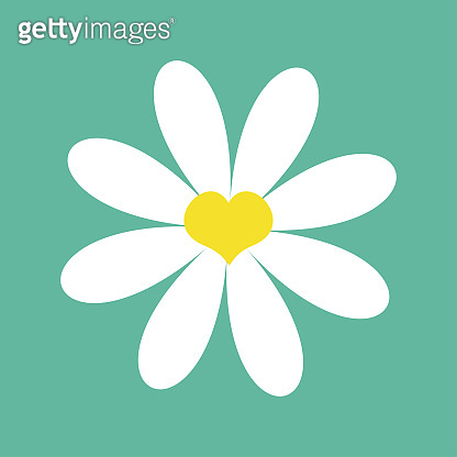 White chamomile daisy. Cute flower plant collection. Valentines day symbol. Yellow heart center. Love card. Camomile icon Growing concept. Flat design. Green background. Isolated.