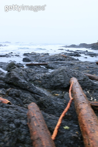 Cedar Logs and Kelp