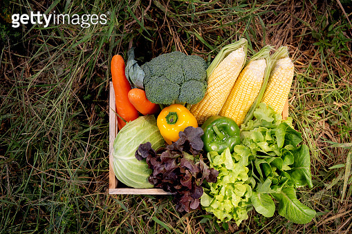 Fresh organic raw group vegetable for diet in the basket on grass in the garden, harvest agriculture and nutrition for healthy food in farm.