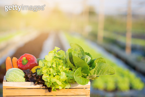 Fresh organic raw vegetable and fruit in basket for salad in hydroponic farm, vegetarian and healthy food or ingredient and herb for cooking health with copy space, harvest for farm, nutrition concept.